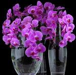 Мобильный LiveInternet Орхидея фаленопсис. Уход за растением по месяцам! | Der_Engel678 - Дневник Der_Engel678 |