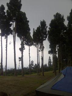 Damar Forest at Cidahu Gunung Salak Sukabumi - West Java