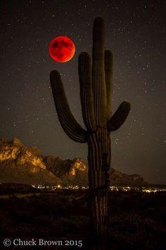 Saguaro and blood moon 2015 Beautiful Moon, Beautiful World, Foto Nature, Shoot The Moon, Moon Signs, Red Moon, Blood Moon, Foto Art, Stars And Moon
