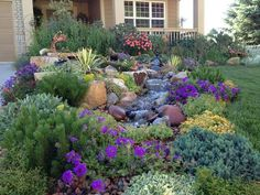 texas xeriscaping ideas | An exuberant border that attracts…