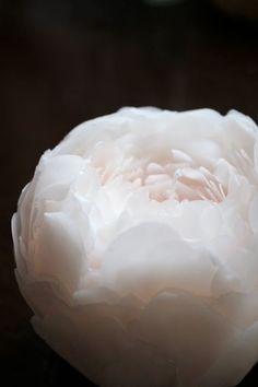 シャクヤクのキャンドル&イベントのお知らせ|新潟 手作り石鹸の作り方教室 アロマセラピーのやさしい時間