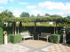 Leibomen: een levende muur of dak geeft net dat extra tintje in de tuin   Tuinkrant.com