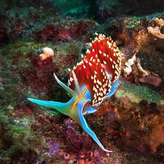 Nudibranch Trance - Jason Madsen