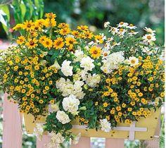 Идеи цветочных композиций для балконных ящиков