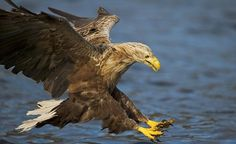 RSPB is accused of 'obsession' with saving birds of prey by ...