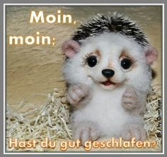 Good Morning, Teddy Bear, Animals, Winter, Frases, Morning Sayings, Good Night, Sleep Better, Good Day