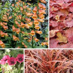 Digitale Goldcrest - Association May Flowers, Horticulture, Garden Design, Planters, Landscape, Nature, Coups, Gardening, Simple