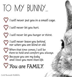 From MOM❤️ ❤️No one will ever understand my love for my bunnies I love you more then life it's self❤️