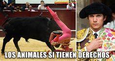 """Como todo sádico que tortura y mata animales por placer, el torero francés dijo hace unos días que """"los animales no tienen derechos"""", pero esta vez se llevó un buen susto de una de sus víctimas."""