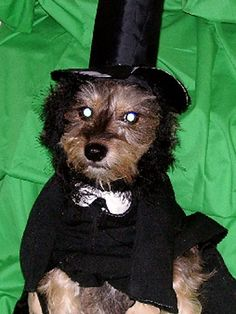 Submitted by: Reneefrederick We cannot tell a lie, this pup is adorable in his Abraham Lincoln costume./