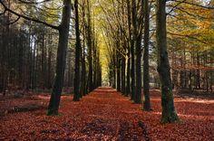 Public Domain Images – Autumn Orange Leaves Trees Trail