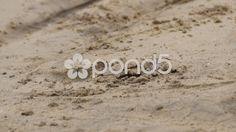 Seagull watching its prey on the beach - Stock Footage | by BucleFilms