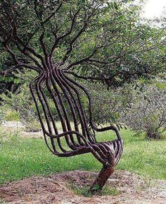 Artist Peter Cook grew this living garden chair using tree shaping methods, primarily training a living tree through constricting the direction of branch growth. The chair took about eight years to grow.