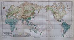 VERBREITUNG PFLANZENGRUPPEN ERDE 1896 alte Landkarte Antique Map Lithographie