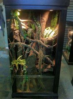 Reptile enclosure with aquarium Les Reptiles, Cute Reptiles, Reptiles And Amphibians, Chameleon Terrarium, Terrarium Reptile, Bearded Dragon Cage, Bearded Dragon Habitat, Pet Dragon, Water Dragon