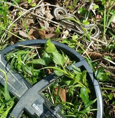 Three friendly snakes joined me in the woods today - gently warning that I should watch out for their nasty cousins.   #metaldetecting #snakes #history #detecting.us