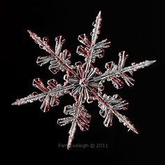 Real snowflake I luv the red undertoned lighting I Love Snow, I Love Winter, Winter Wonder, Winter Snow, Winter Time, Snow Scenes, Winter Scenes, Snowflake Photos, Real Snowflakes