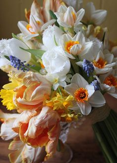 Parrot tulips mixed with heirloom daffodils, narcissus and little blue muscari