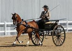 driving carriages
