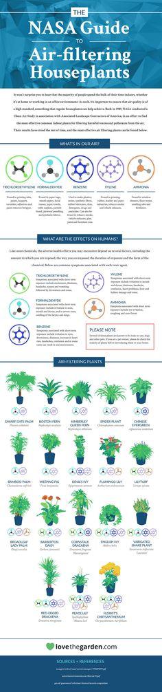 Ter plantas em casa, além de deixar o ambiente mais agradável e bonito, ajuda a filtrar o ar do local. Mas algumas são mais eficazes que as outras.    Pensando nisso, aNASAcriou um infográfico que destaca quais são as plantas mais indicadas para...