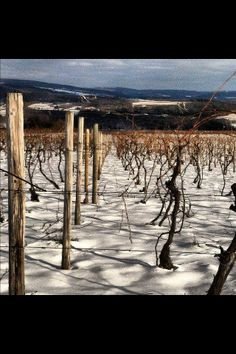 Finger Lakes #Wine Country #fingerlakes #upstatenewyork