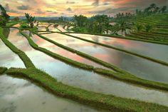 Rice Terraces Jatiluwih, Bali