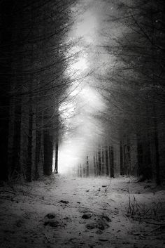 midnightmartinis:    if you go down in the woods today…- by james burden