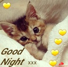 Good Day Quotes: Good Night Sister and allhave a restful sleep God bless. Good Night Cat, Night Night Sleep Tight, Good Night Beautiful, Good Night Prayer, Good Night I Love You, Good Night Blessings, Dream Night, Good Night Sweet Dreams, Good Night Moon