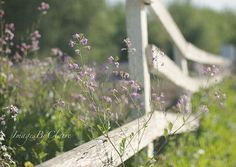 Wild Flowers Resting On A Country Fence