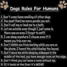 #dog #quote #cute