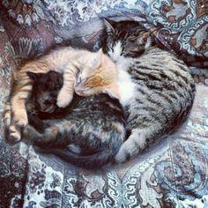 Freyja, Robb, Daenerys... Ferai cats