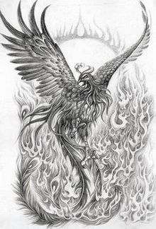 realistic phoenix bird drawings - Google Search