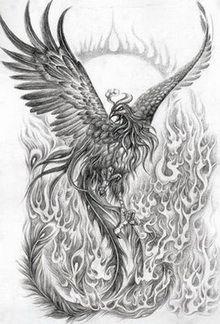realistic phoenix bird drawings - Google Search