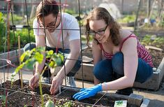 City Gardens: Growing Vegetables for Beginners <== great post!