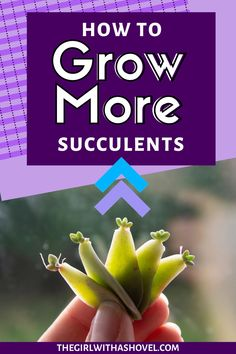 Do you want to grow your own succulents from leaves or cuttings? Check out my step-by-step guide on propagating succulents! Be successful every time! #growyourown #succulentbabies Succulent Propagation | Succulent Propagation from Leaves | Indoor Succulent Care | Indoor Succulent Plant Care | How to Propagate Succulents | Propagating Succulents, Indoor Plant Care Guide, Air Purifying House Plants, Houseplants Low Light, Succulent Gardening, Succulent Care Indoor, Propagation, Planting Herbs, Plant Decor