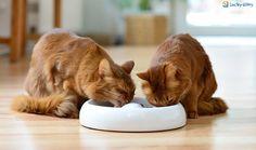 Was ist gutes Katzenfutter?