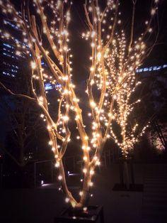 帰り道。ふとした街路樹の光がきれい。