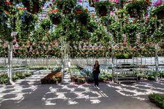 Grown in Idaho...Moss Greenhouse in Jerome