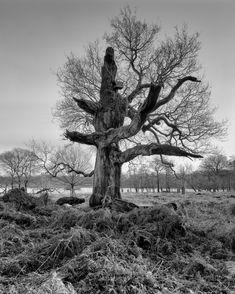 Schneider 58mm Super Angulon XL @ f22. Ilford Delta 100.  #mkhardy #largeformat #film #Ilford #London #tree #filmisnotdead #Richmond #schneider #ilforddelta100