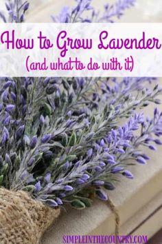 Growing Lavender, Growing Herbs, Growing Vegetables, Growing Gardens, Diy Garden, Garden Projects, Garden Plants, Garden Tips, Garden Ideas