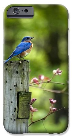 Eastern Bluebird iPhone 6 Case by Christina Rollo.  Protect your iPhone 6 with an impact-resistant, slim-profile, hard-shell case.  The image is printed directly onto the case and wrapped around the edges for a beautiful presentation.  Simply snap the case onto your iPhone 6 for instant protection and direct access to all of the phones features!