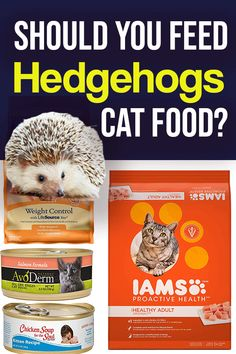 Should you feed hedgehogs cat food? This article explores hedgehog nutritional r… Should you feed hedgehogs cat food? This article explores hedgehog nutritional recommendations and recommendations for cat food. Check out these hedgehog care tips today. Hedgehog Food, Hedgehog Care, Pygmy Hedgehog, Hedgehog Facts, Best Cat Food, Dry Cat Food, Dog Food, Sweet Cat, Cat Care Tips