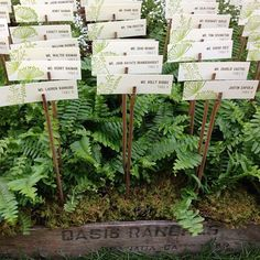 Image result for fern wedding place settings