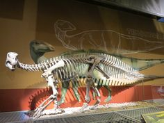 The Sinew Lizard or Tenontosaurus Dossi dinosaur