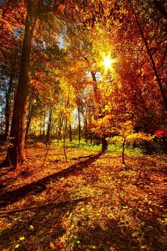 """"""" Woods Walking """" - Wisconsin Horizons by Phil Koch. image by Phil Koch. Fall Pictures, Fall Photos, Nature Pictures, Autumn Scenes, Autumn Nature, Autumn Aesthetic, Fall Wallpaper, Autumn Photography, Nature Scenes"""