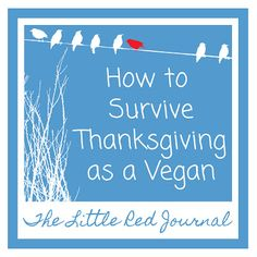 The Little Red Journal: Dead Turkeys & Butter Rolls: How to Survive Thanksgiving as a Vegan