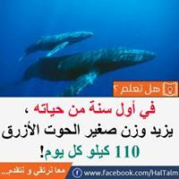 Pin By Emad Fouad On معلومة سريعة Whale Animals Poster
