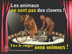 PARTAGE OF FONDATION BRIGITTE BARDOT........ON FACEBOOK............ANIMALS ARE NOT THE CIRCUS CLOWNS ...... LIVE WITHOUT ANIMALS............