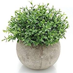 5 Simple and Creative Ideas: Artificial Plants Decoration Decor artificial plants indoor leaves.Artificial Grass How To Install artificial plants flower pots. Artificial Topiary, Small Artificial Plants, Artificial Orchids, Fake Plants, Indoor Plants, Potted Plants, Mini Plants, Artificial Turf, Garden Plants