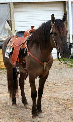 This is my dream horse right here